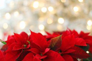 Concerto natalizio presso il Centro vescovile Cardinale Urbani